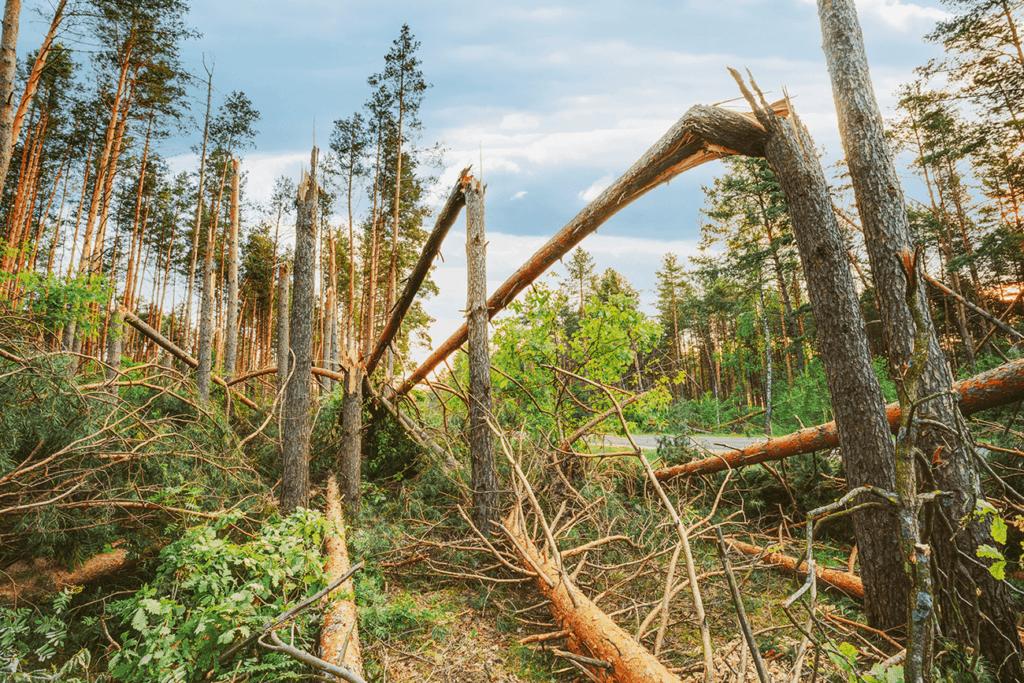 Wald für Sachsen ERTL Gruppe